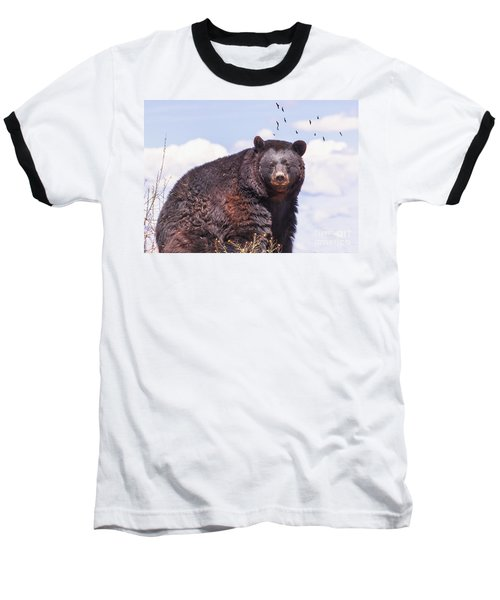 American Black Bear Baseball T-Shirt by Janice Rae Pariza