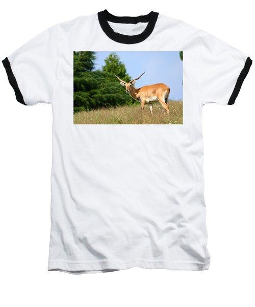 Antelope Baseball T-Shirt