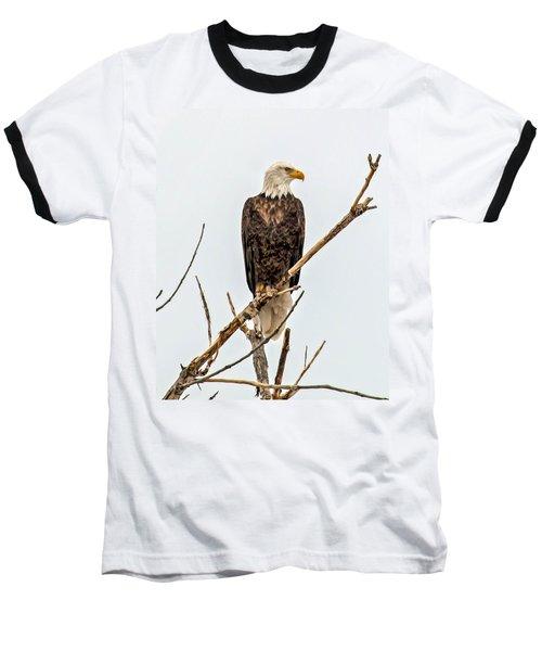 Bald Eagle On A Branch Baseball T-Shirt