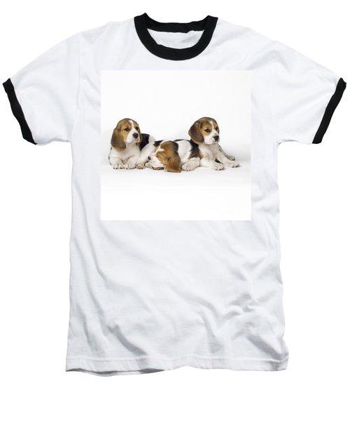 Beagle Puppies, Row Of Three, Second Baseball T-Shirt