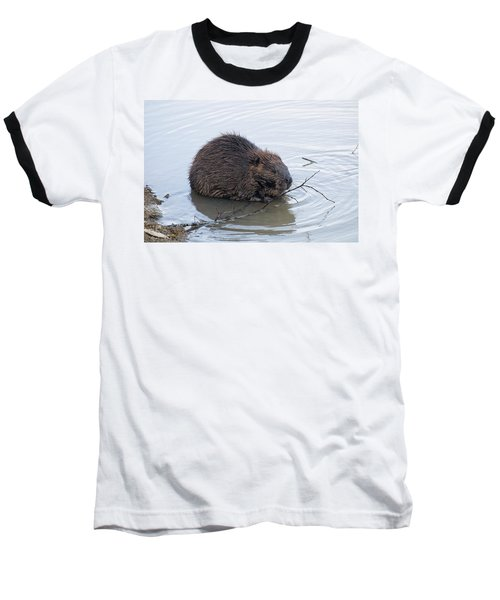 Beaver Chewing On Twig Baseball T-Shirt by Chris Flees