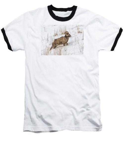 Bighorn In Yellowstone Baseball T-Shirt