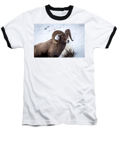 Bighorn Ram Baseball T-Shirt