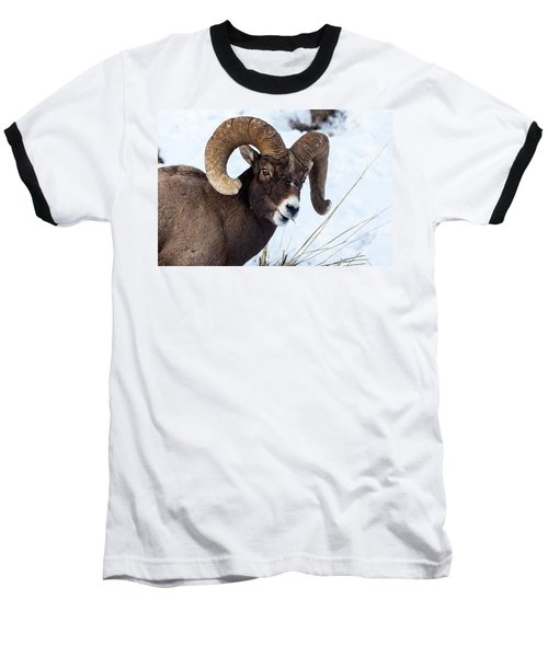 Bighorn Sheep Baseball T-Shirt