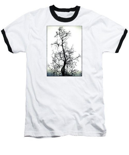Bird In The Branches Baseball T-Shirt by Caitlyn  Grasso