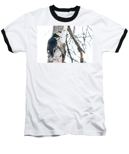 Black-backed Woodpecker Baseball T-Shirt