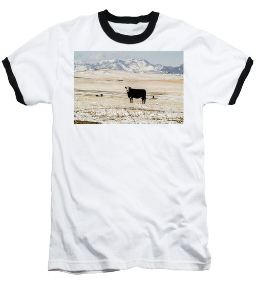 Black Baldy Cows Baseball T-Shirt by Sue Smith