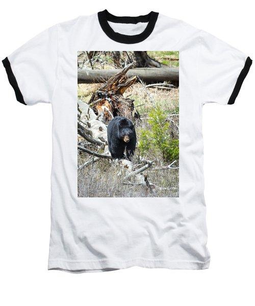 Black Bear Baseball T-Shirt