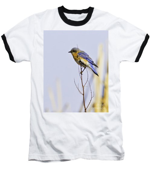 Bluebird Baseball T-Shirt
