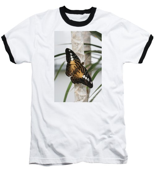 Brown Clipper Butterfly #2 Baseball T-Shirt by Judy Whitton