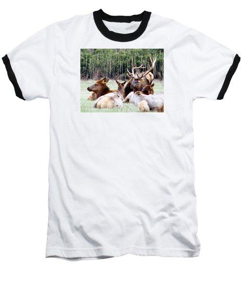 Bull Elk And His Girls 2 Baseball T-Shirt