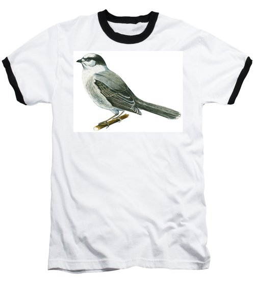 Canada Jay Baseball T-Shirt by Anonymous
