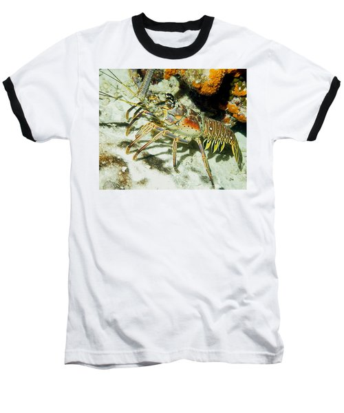 Caribbean Spiny Reef Lobster  Baseball T-Shirt by Amy McDaniel