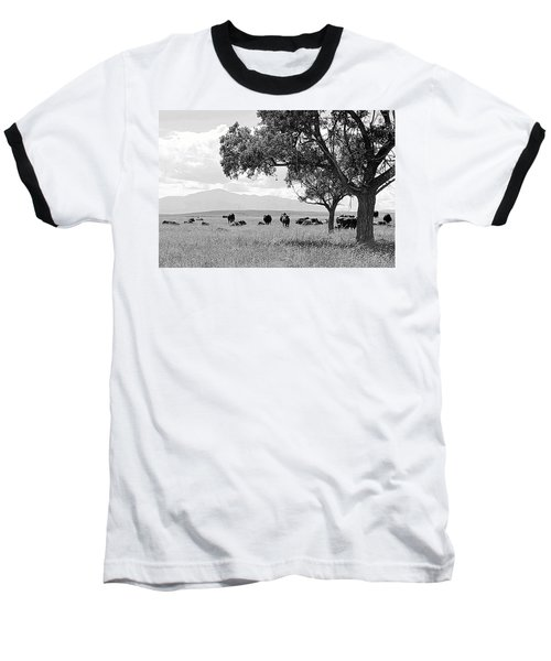 Cattle Ranch In Summer Baseball T-Shirt by Clarice  Lakota