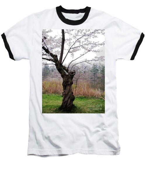 Cherry Blossom Time Baseball T-Shirt by Nina Silver