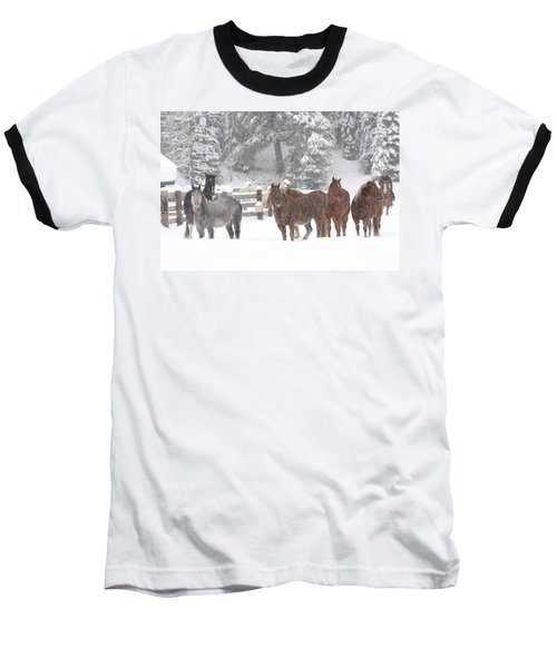 Cold Ponnies Baseball T-Shirt by Diane Bohna