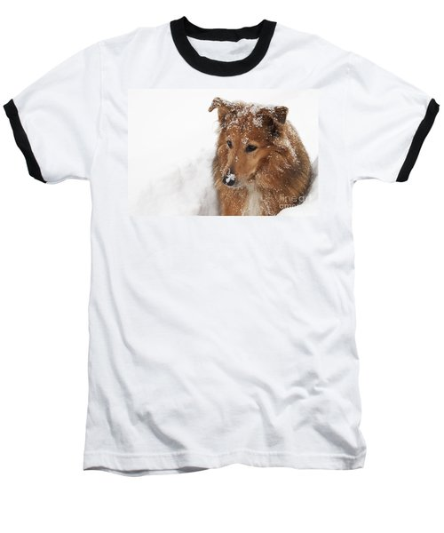 Collie In The Snow Baseball T-Shirt