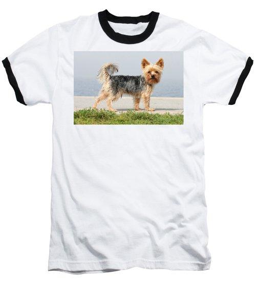 Cut Little Dog In The Sun Baseball T-Shirt