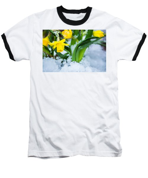 Daffodils In The Snow  Baseball T-Shirt