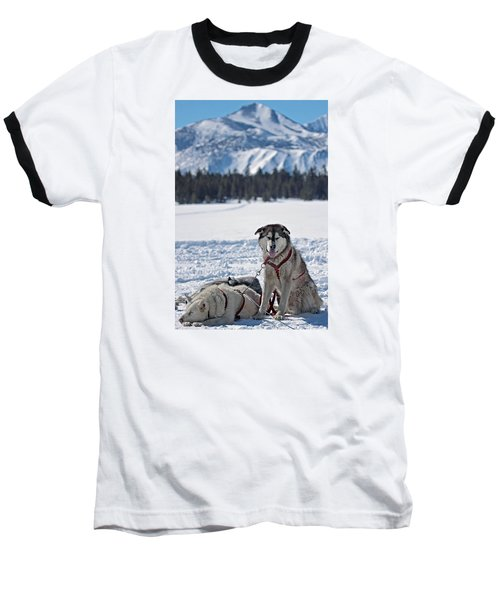 Dog Team Baseball T-Shirt