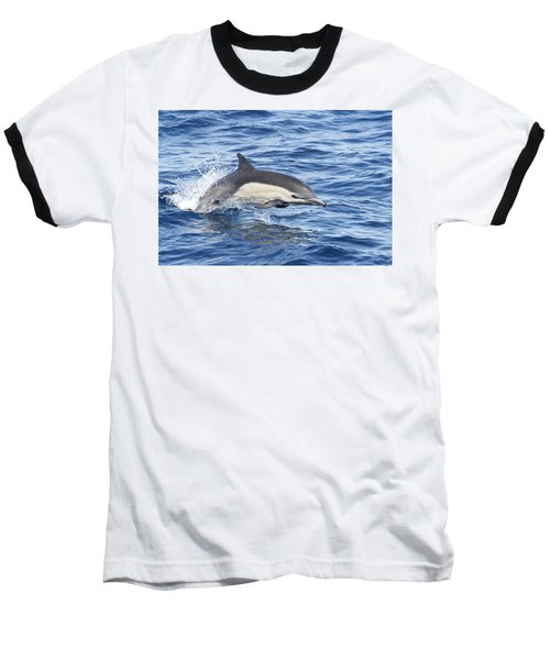 Dolphin At Play Baseball T-Shirt by Shoal Hollingsworth