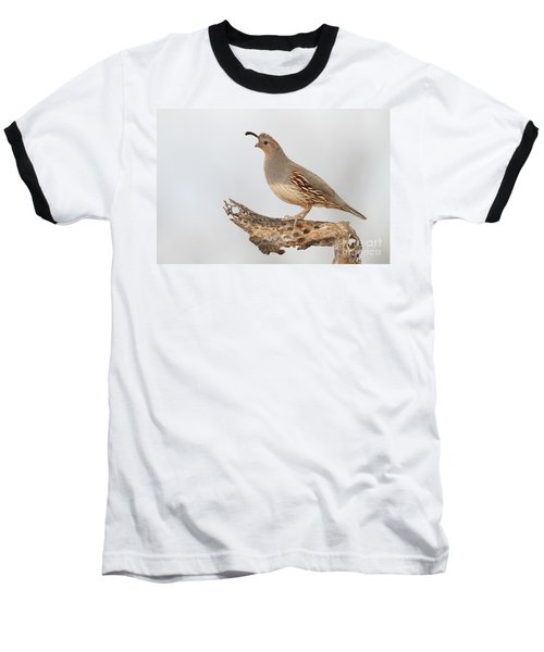 Female Gambel's Quail Baseball T-Shirt