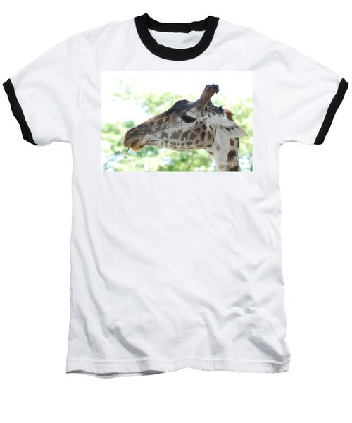 Giraffe Chewing On A Tree Branch Baseball T-Shirt by DejaVu Designs