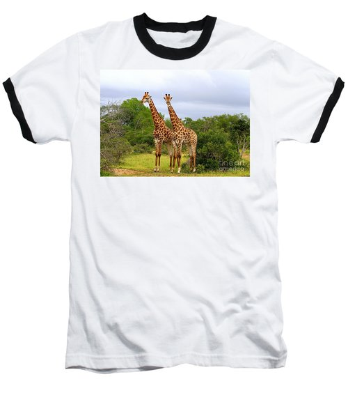 Giraffe Males Before The Storm Baseball T-Shirt