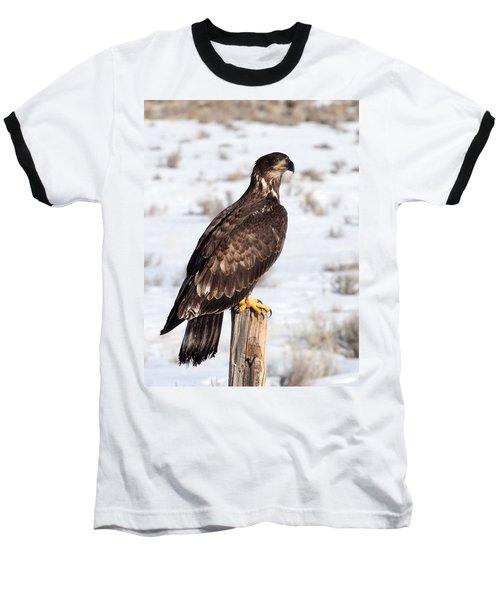 Golden Eagle On Fencepost Baseball T-Shirt by Nadja Rider