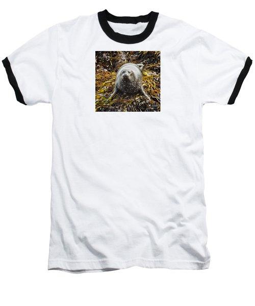 Harbor Seal Baseball T-Shirt by Alice Cahill