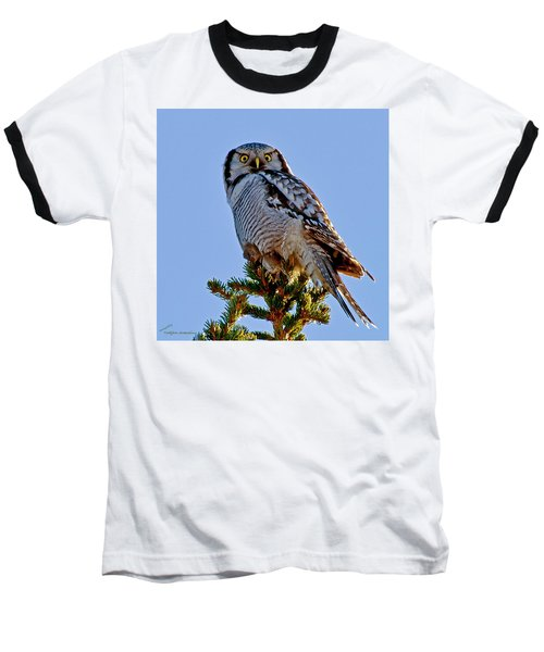 Hawk Owl Square Baseball T-Shirt by Torbjorn Swenelius