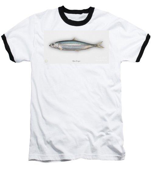 Herring  Clupea Harengus - Hareng - Arenque - Silakka - Aringa - Seafood Art Baseball T-Shirt