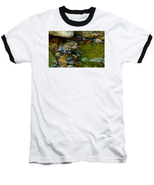 Is There A Prince In There? - Frog On Rocks Baseball T-Shirt by Jane Eleanor Nicholas