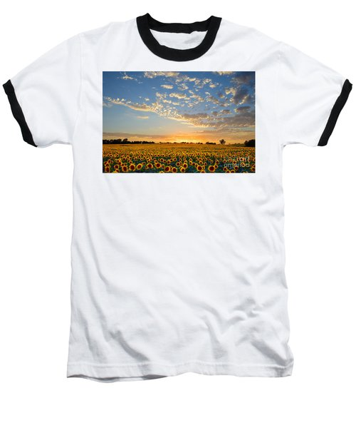 Kansas Sunflowers At Sunset Baseball T-Shirt by Catherine Sherman
