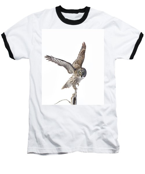 Lapland Owl On White Baseball T-Shirt