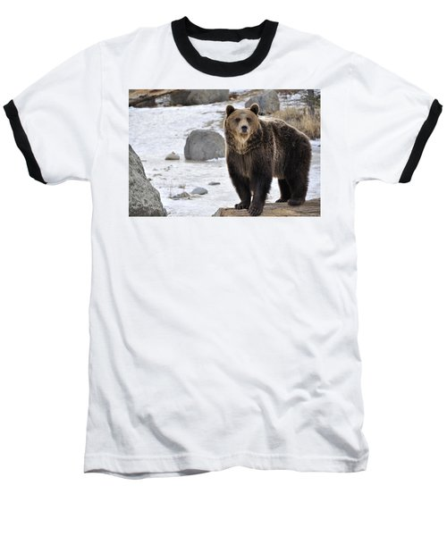 Baseball T-Shirt featuring the photograph Montana Grizzly  by Fran Riley
