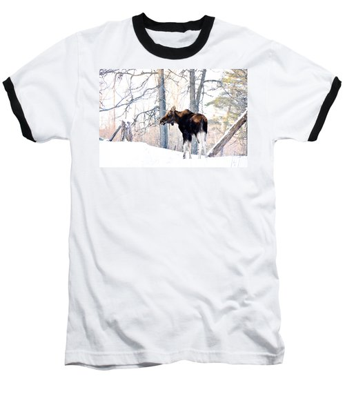 Mr. Moose Baseball T-Shirt