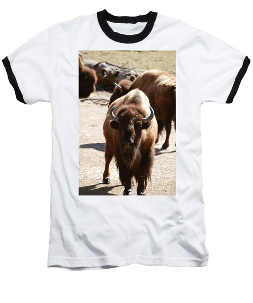North American Bison Baseball T-Shirt by DejaVu Designs