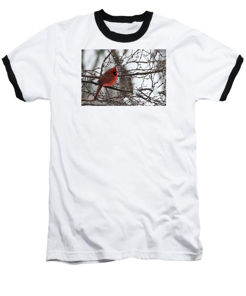 Northern Red Cardinal In Winter Baseball T-Shirt