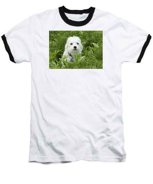 Baseball T-Shirt featuring the photograph Oops Busted - Cute White Dog by Jane Eleanor Nicholas