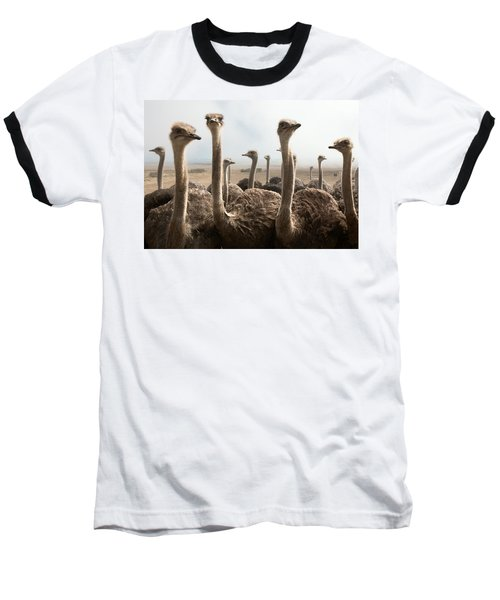 Ostrich Heads Baseball T-Shirt by Johan Swanepoel