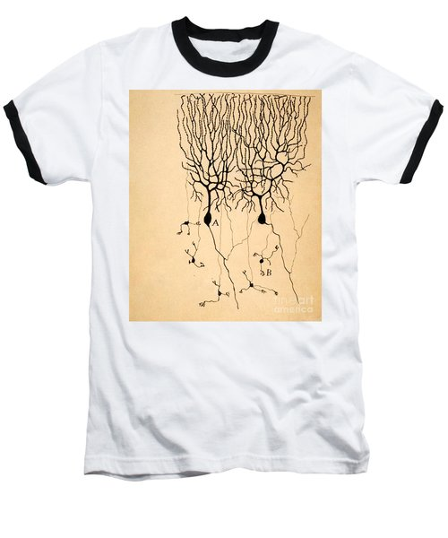 Purkinje Cells By Cajal 1899 Baseball T-Shirt by Science Source