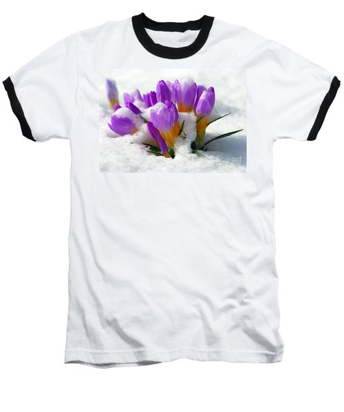 Purple Crocuses In The Snow Baseball T-Shirt