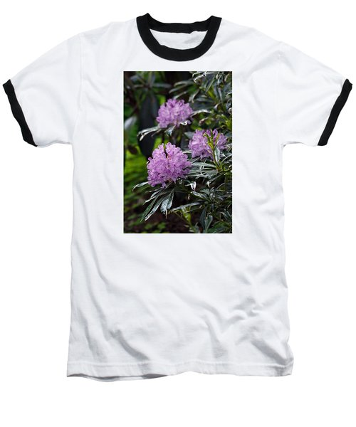 R. Ponticum Variegatum Baseball T-Shirt by Chris Anderson