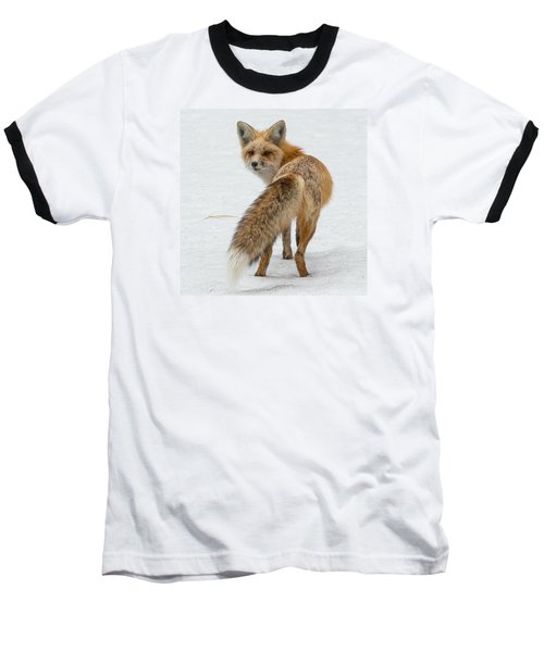 Red Fox Of Silver Gate Baseball T-Shirt by Yeates Photography