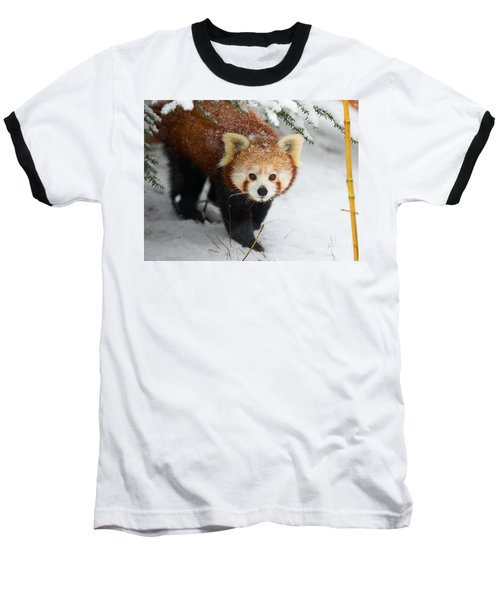 Red Panda In The Snow Baseball T-Shirt