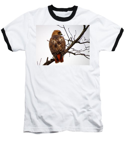 Red Tail Hawk In Winter Baseball T-Shirt