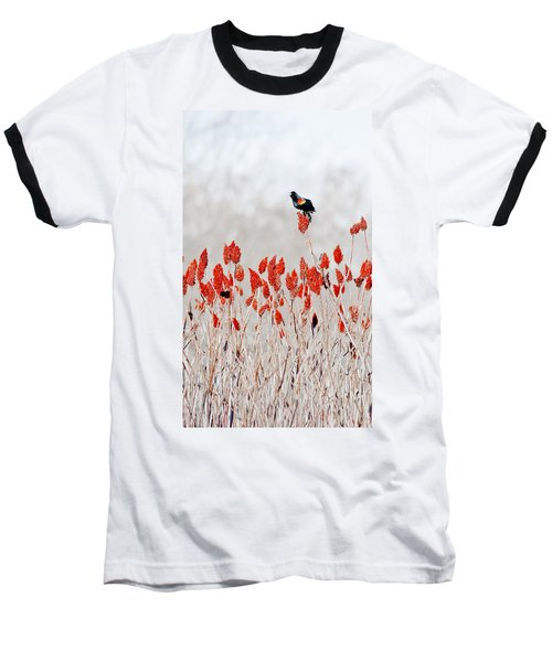Red Winged Blackbird On Sumac Baseball T-Shirt by Steven Ralser