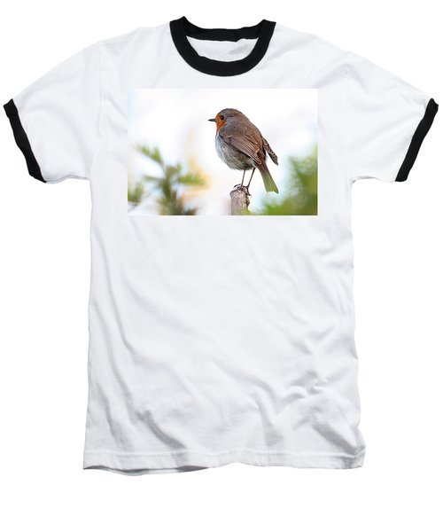 Robin On A Pole Baseball T-Shirt