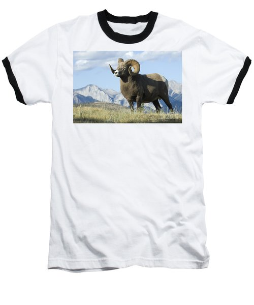 Rocky Mountain Big Horn Sheep Baseball T-Shirt by Bob Christopher